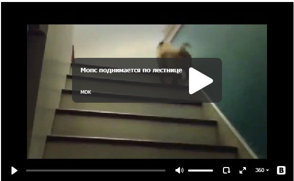 Мопс поднимает по лестнице