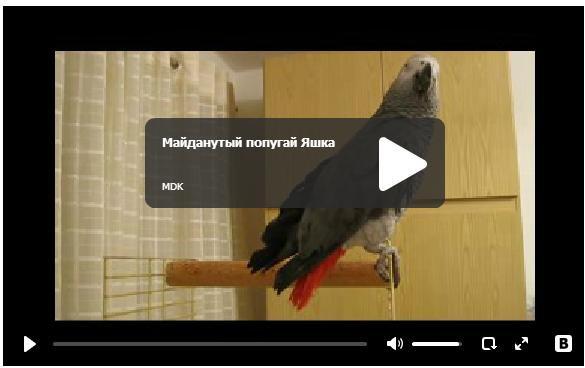 Майданутый попугай - говорящая птичка