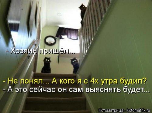 Весёлые котоматрицы - приколы с кошками
