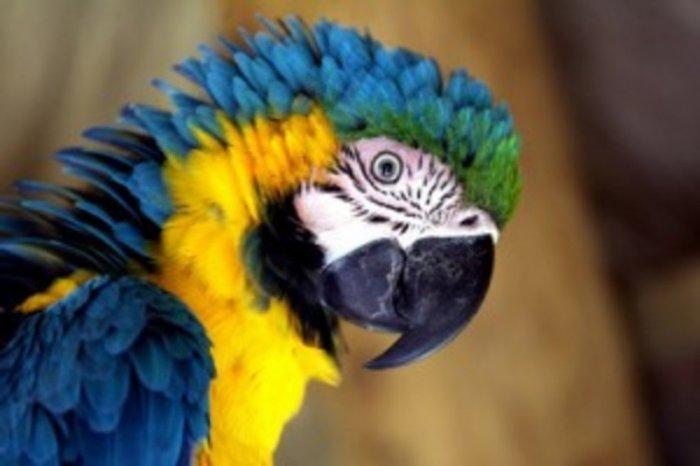 Приколы про попугаев