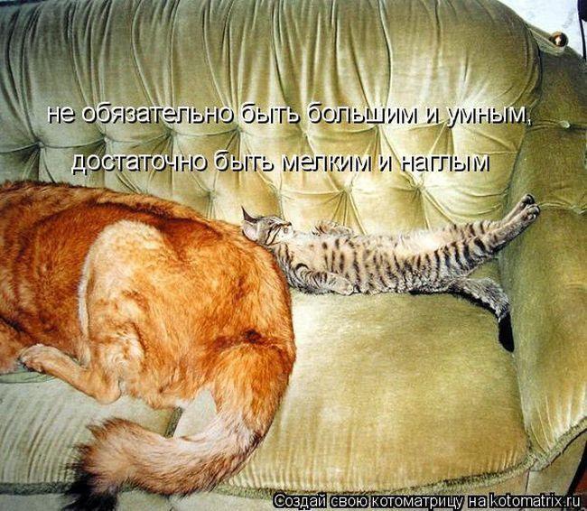 Прикольные котоматрицы - приколы про кошек