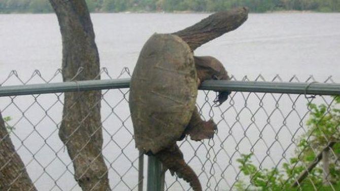 Застрявшие животные - нелепые фото