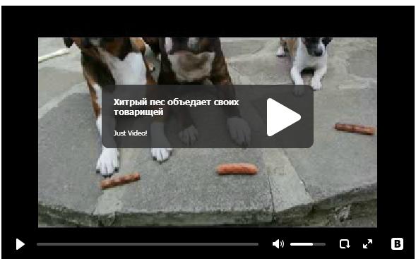 Хитрый пес объедает своих товарищей - умная собака