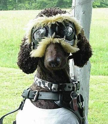 Прикольные костюмы для собак