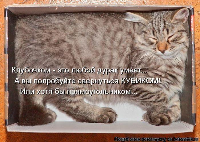 Подборка весёлых котоматриц
