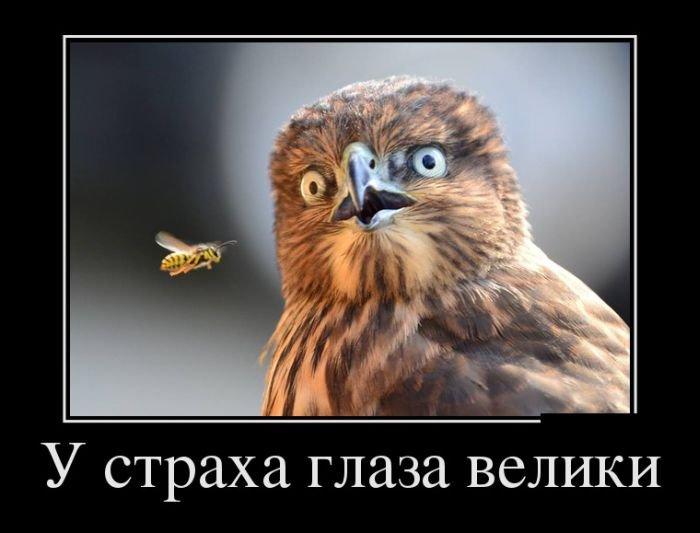 Летние демотиваторы - прикольные картинки