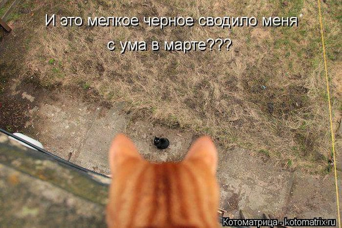 Лучшие котоматрицы недели - приколы с кошками