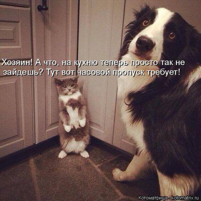Котоматрицы - самые смешные кошки недели