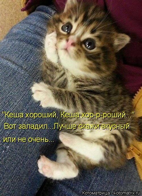 Лучшие котоматрицы - весёлые картинки