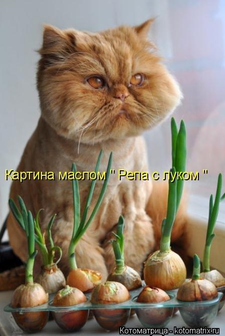 Лучшая котоматрица недели - приколы про животных