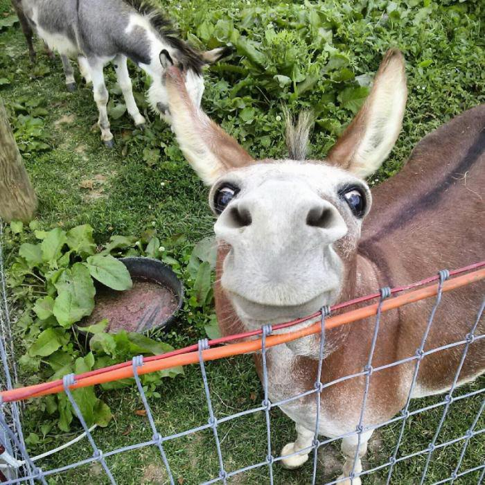Прикольные животные - сборник интересных фотографий
