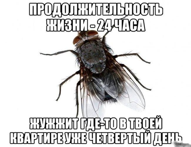 http://xaxa-net.ru/uploads/posts/2014-07/1406468782_prikolnye-kartinki-na-voskresene-4.jpg