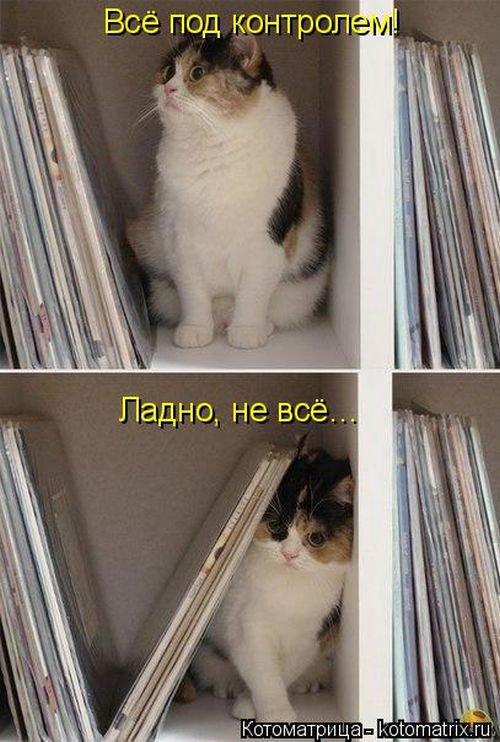 Весёлые котейки и собаки - смешные котоматрицы