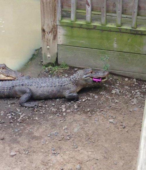 Приколы из зоопарка - смешные картинки с животными