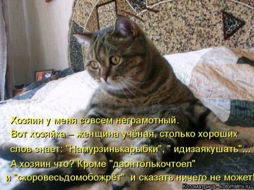 Котоматрицы - приколы про кошек