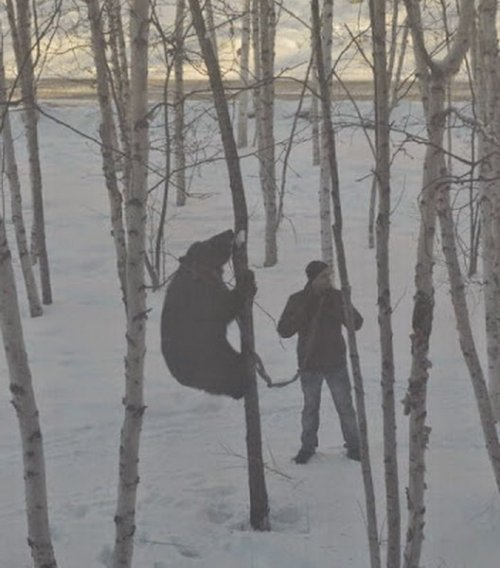 Медведи в России. Прикольные картинки