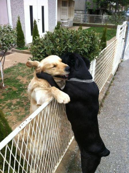 Приколы с собаками - смешные картинки