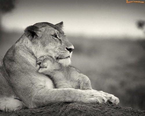 Красивые животные. Милые фотографии