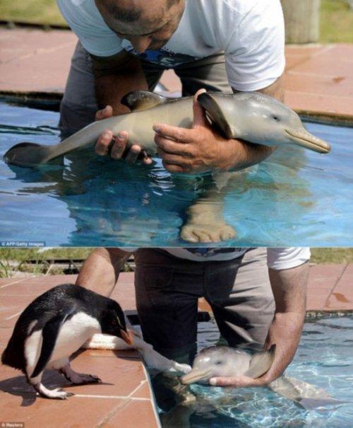 Фотографии животных, которые заставят улыбнуться