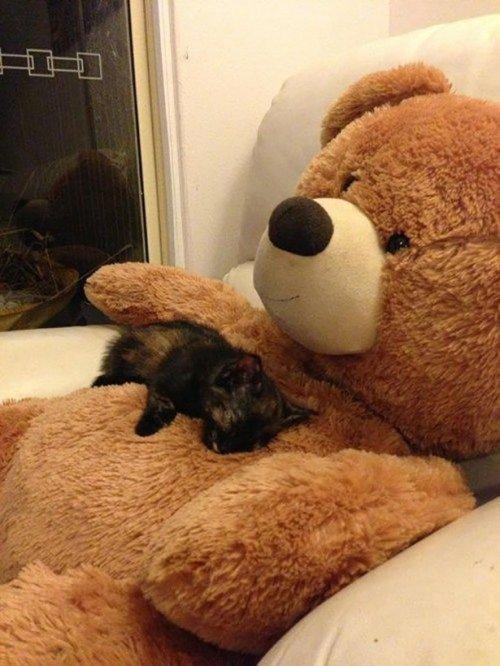 Приколы с кошками. Про животных
