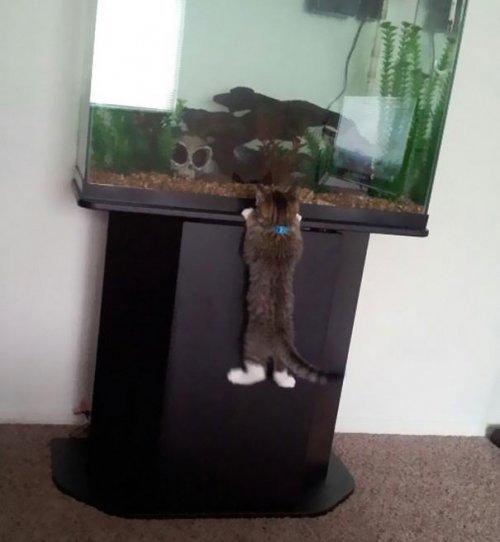 Кошки-воришки. Про животных