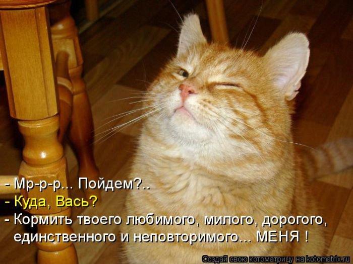 Картинки-котоматрицы. Прикольные кошки