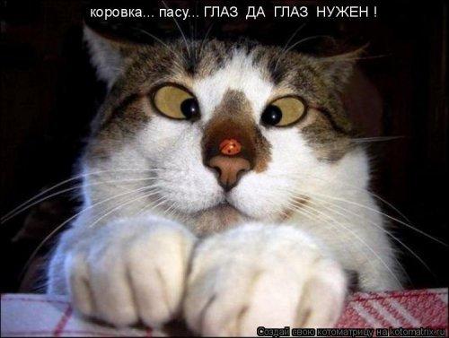 Свежая котоматрица. Несколько фото котэ с надписями