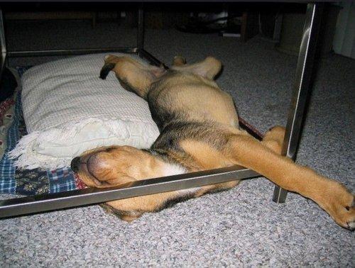 Спящие собаки - смешные картинки про животных