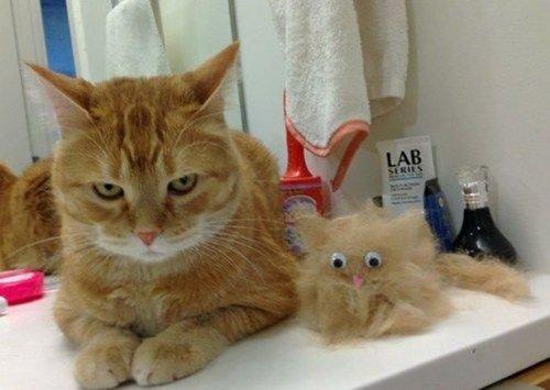 Добрые котоприколы - про животных