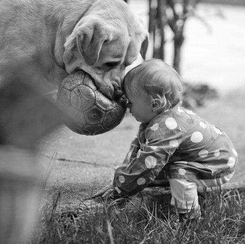 Малыши и собаки - фото с животными