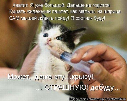 Свежие котоматрицы для настроения