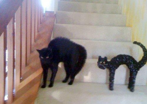 Кошки-двойники. Смешные сходства