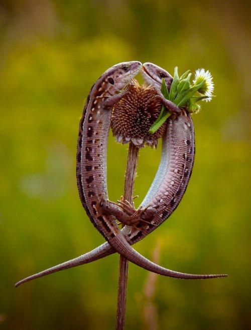 Очаровательные рептилии