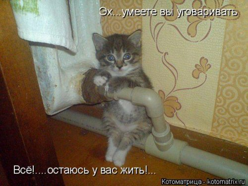 Свежие котоматрицы. По приколу для вас