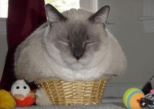 Кошки, умеющие прятаться везде. Про животных