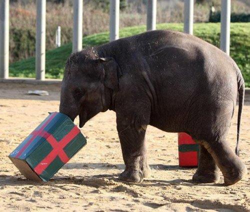 Новый год в мире животных