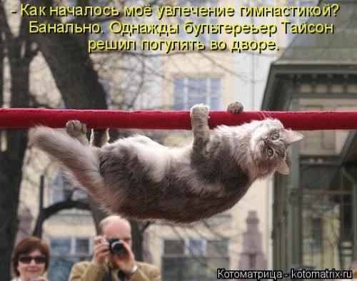 Январская котоматрица. Кошки с приколами