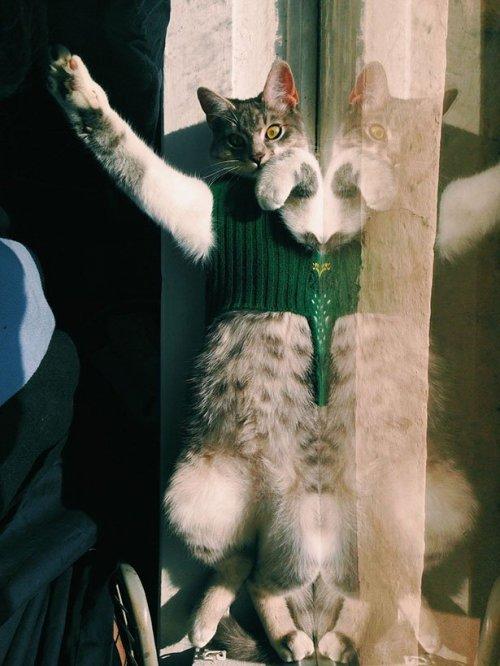 Приколы с кошками. Няшные животные