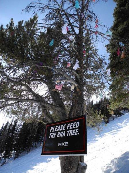 Приколы с горнолыжных баз