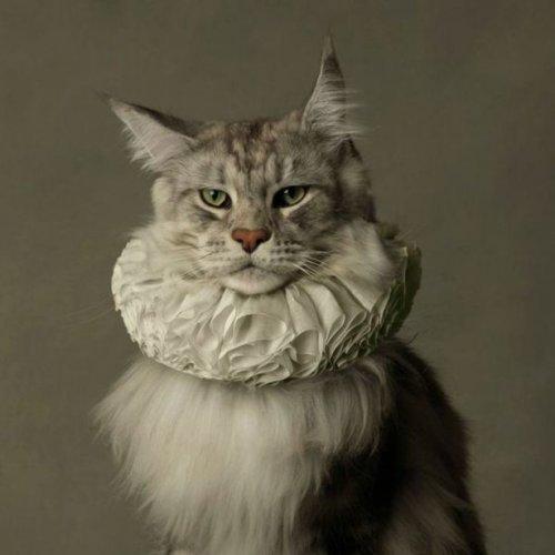 Свежие кото-приколы. Весёлые фото живоных