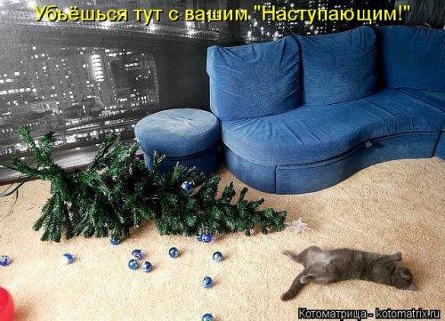 Котоматрицы после новогодних праздников