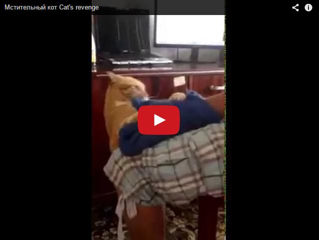 Мстительный кот. Про животных
