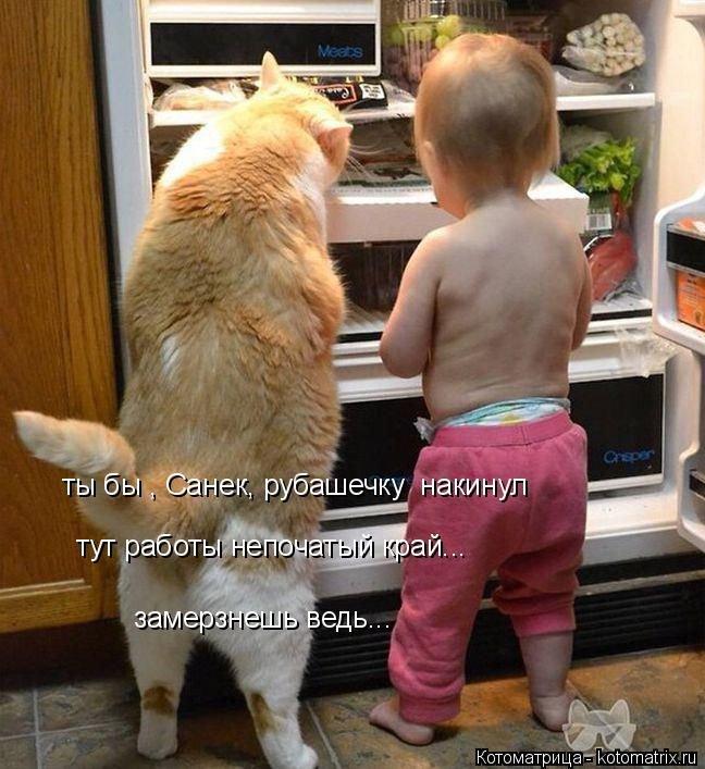 Весёленькие котоматрицы. Про животных