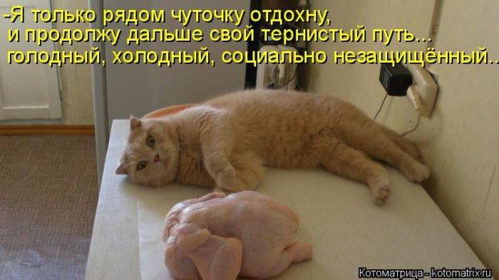 http://xaxa-net.ru/uploads/posts/2015-01/1422171831_8-prikolnye-kotomatricyy-20150125.jpg