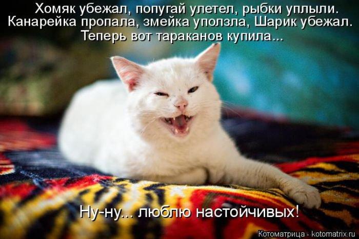Новые прикольные котоматрицы. Про животных