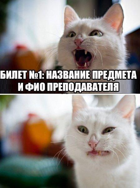 Лучшие мемы этой недели. Прикольные картинки