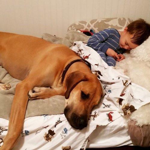 Дети, мечтающие стать животными. Весёлые фото