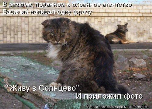 Новая котоматрица. Про животных