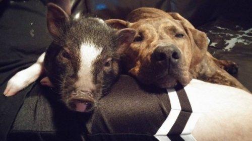 Пёс - лучший друг человека. Фото домашних питомцев