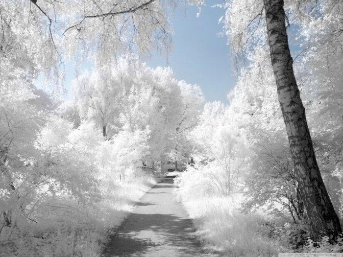 Зимние фото и картинки
